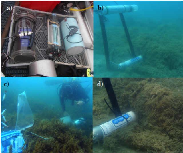 Scuba diving fieldwork: a) Hand-held pH meter (a true old-timer today!), fluometry (PAM) and dissolved oxygen (DO) meter, b) installed Hydrolabs (pH, DO, salinity and temperature), diver measuring pH and DO, and taking water samples in a quadrate dominated by the macroalgae Sargassum sp., d) close of the Hydrolab installed underneath H. clathratus mat